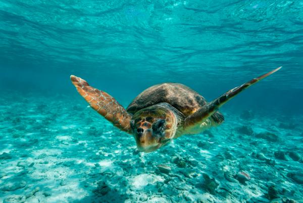 El Acuario de Sevilla se suma a un programa de recuperación de tortugas